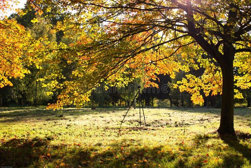 Zonnige dag in de herfst stock afbeelding