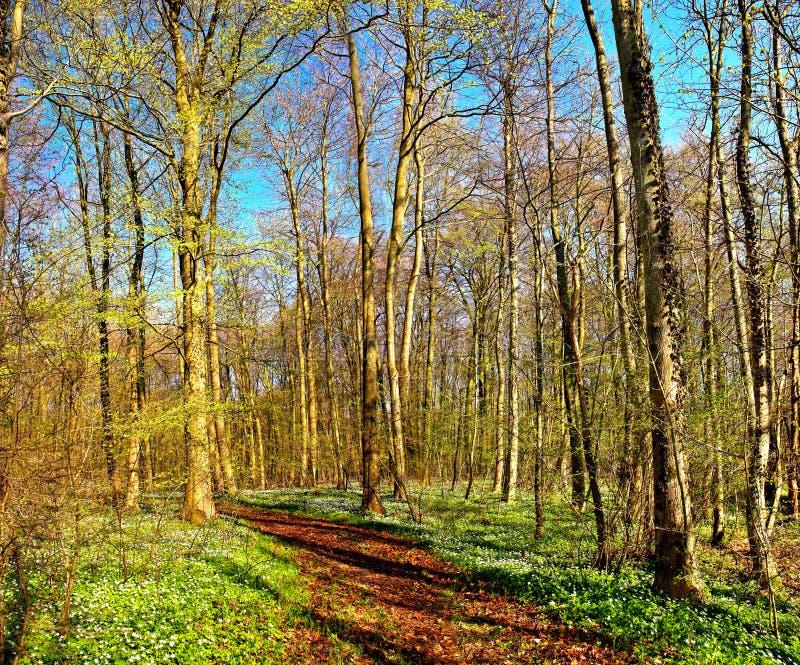 Zonnige dag in de lente - groen bos royalty-vrije stock afbeeldingen