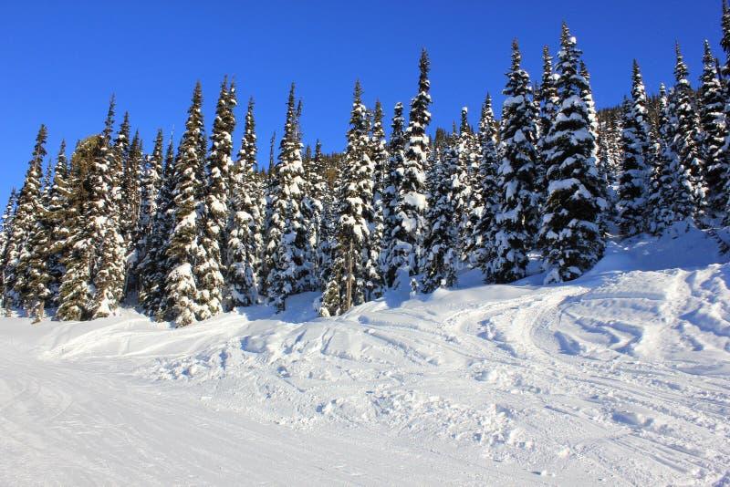 Zonnige dag in een sneeuw de wintersprookjesland royalty-vrije stock afbeeldingen