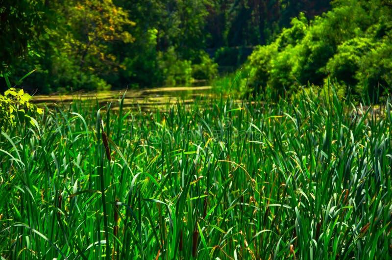 Zonnige dag op een kalme rivier in de zomer stock fotografie