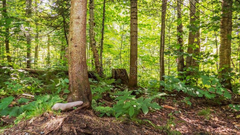 Zonnige dag van binnenuit een gematigd bos royalty-vrije stock afbeeldingen