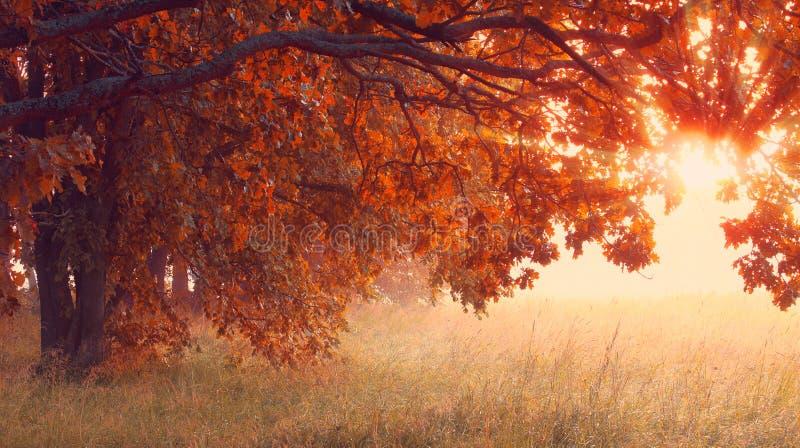 Zonnige de herfstscène Het zegenen van tijdachtergrond royalty-vrije stock foto's