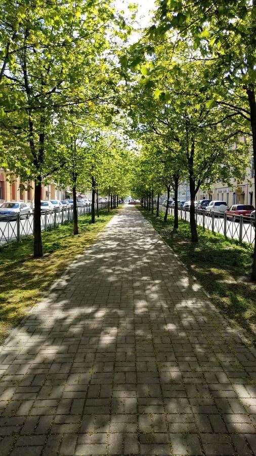 Zonnige de lente schilderachtige groene straat royalty-vrije stock afbeelding