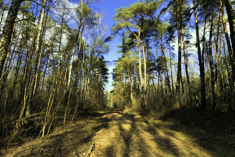 Zonnige de winterdag in het Nationale Park van Kampinos - Polen royalty-vrije stock foto