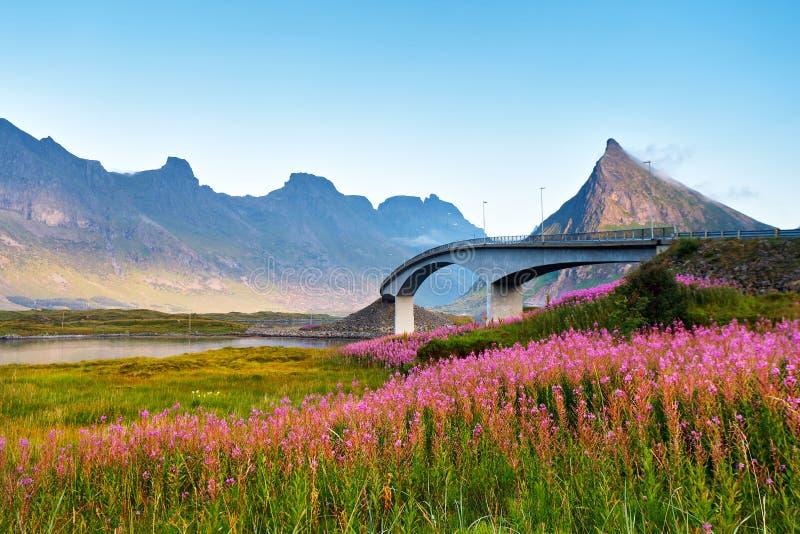 Zonnige de zomerdag van Noorwegen Brug over de fjord royalty-vrije stock afbeeldingen