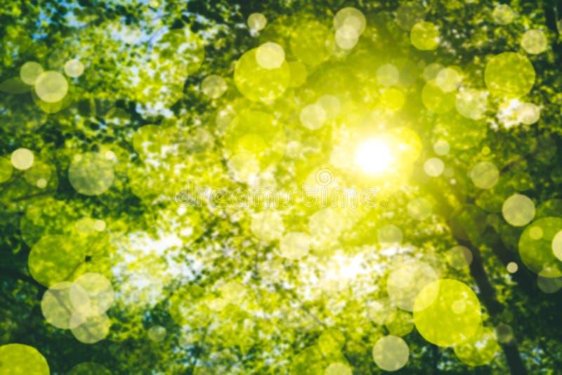 Zonnige groene bosgebladerteachtergrond stock foto's