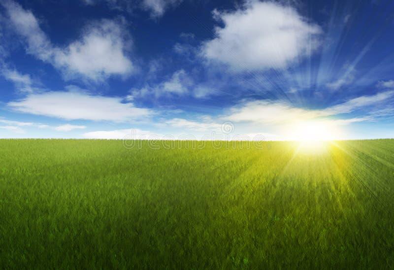 Zonnige hemel over grasrijk gebied stock afbeeldingen