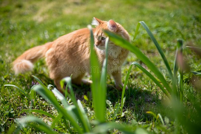 Zonnige kat in zijn eigen wildernis stock afbeeldingen