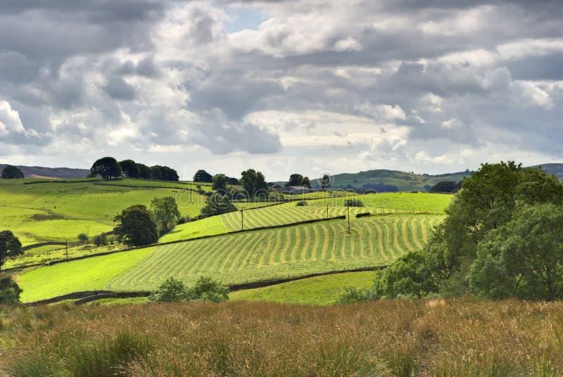 Zonnige landelijke landbouwgrondscène stock fotografie