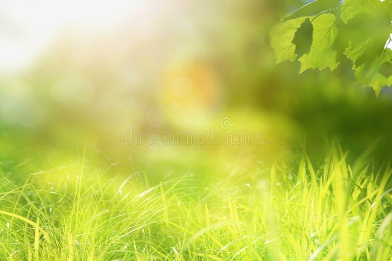 Zonnige natuurlijke achtergrond, de lente of de zomerlandschap royalty-vrije stock fotografie