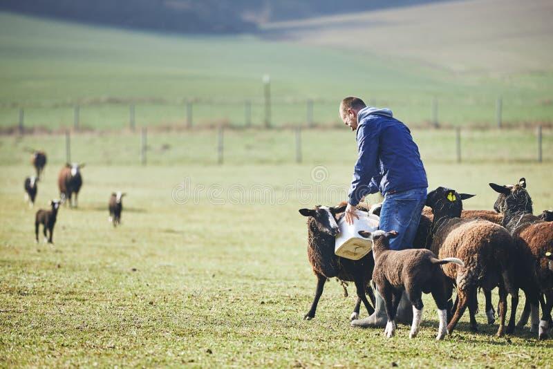 Zonnige ochtend op het landelijke landbouwbedrijf stock afbeelding