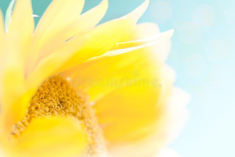 Zonnige omhoog Dichte Zonnebloem - zeer Ondiepe Diepte van Gebied stock afbeelding
