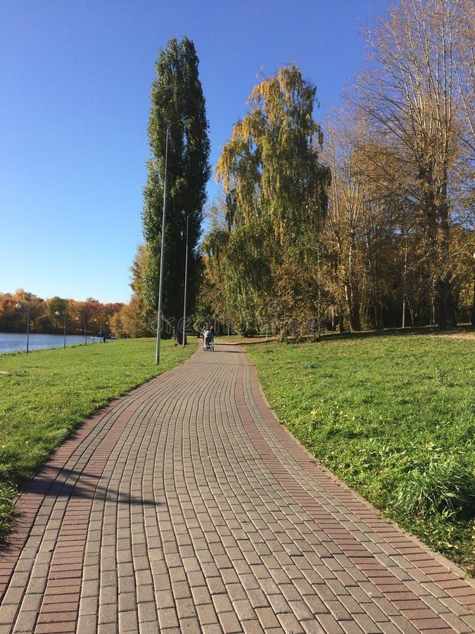 Zonnige promenade dichtbij het meer in het park stock afbeelding