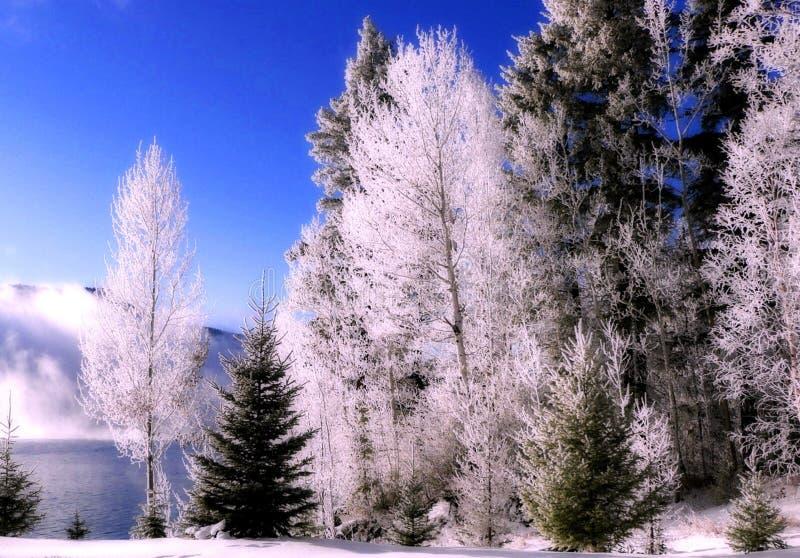 Zonnige sneeuwbomen royalty-vrije stock fotografie