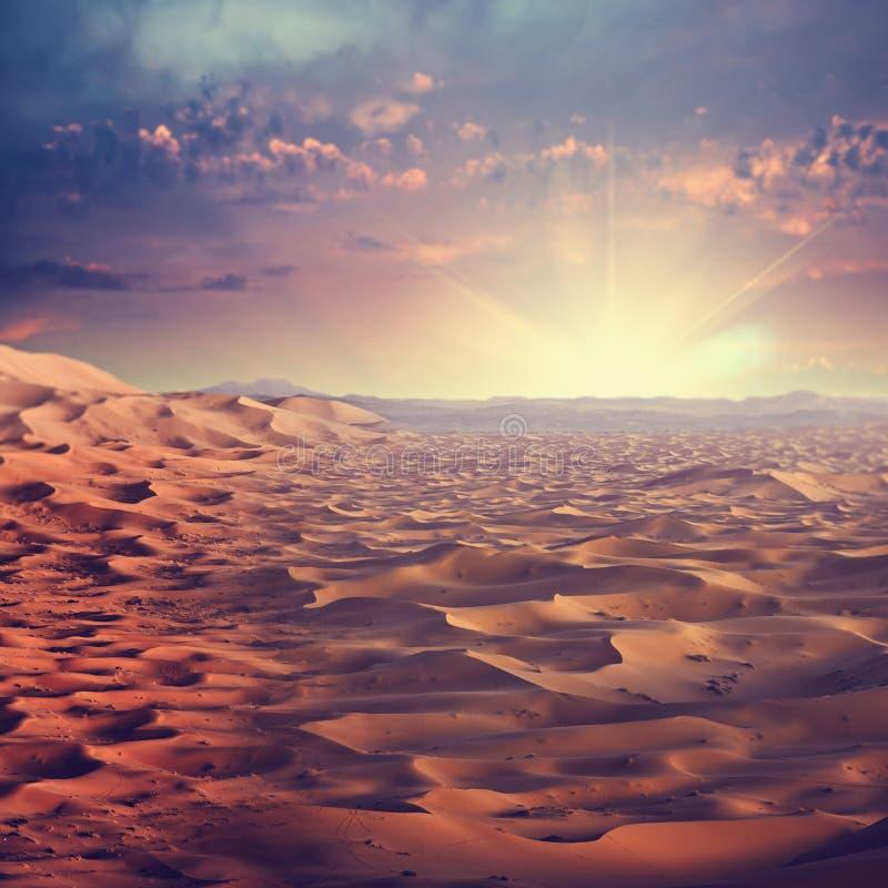 Zonnige woestijn stock afbeeldingen