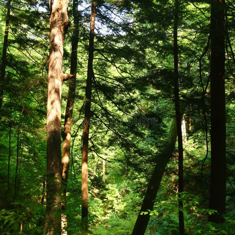 Zonovergoten bosachtergrond stock afbeeldingen