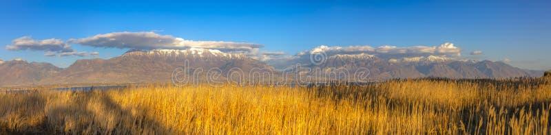 Zonovergoten grassen tegen berg en hemel in Utah stock afbeelding