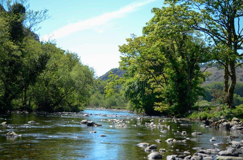 Zonovergoten mening langs een kalme maar rotsachtige rivier die tussen bomen loopt royalty-vrije stock foto