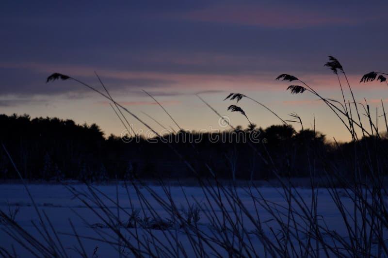 Zonreeksen over moeras in de winter royalty-vrije stock fotografie