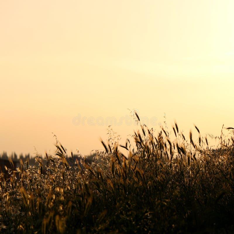 Download Zonsondergang stock afbeelding. Afbeelding bestaande uit openlucht - 54089569