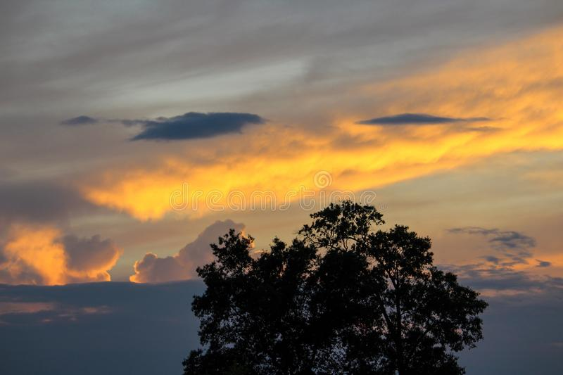 Zonsondergang achter Boom stock foto's