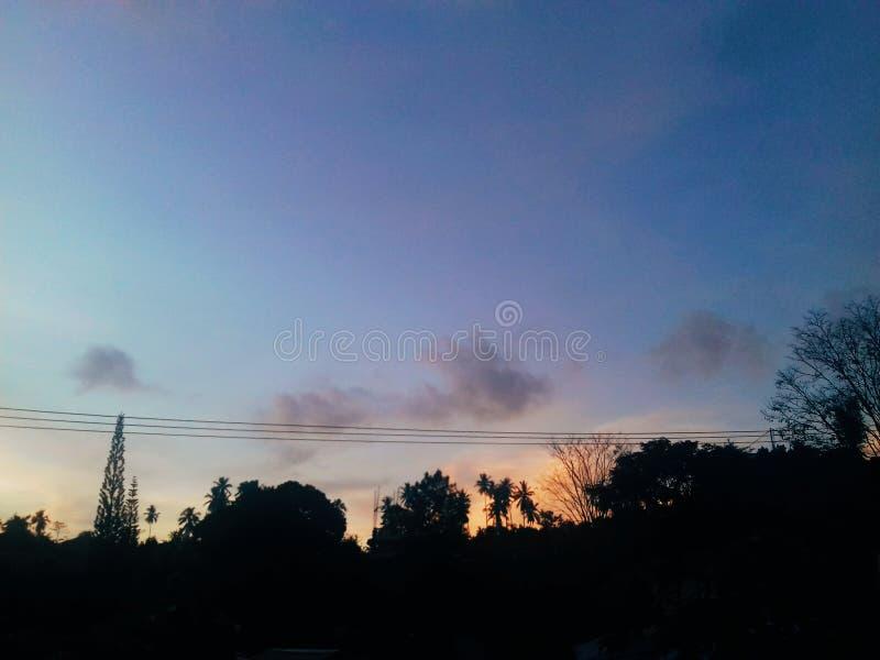 Zonsondergang achter de boom stock fotografie
