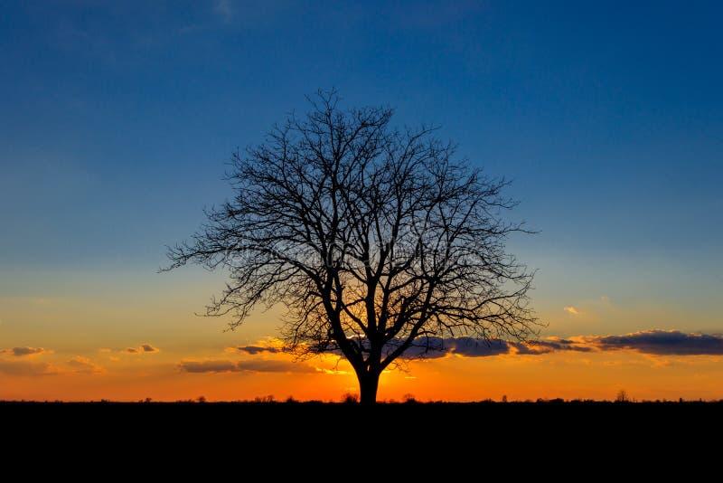 Zonsondergang achter de eenzame boom in het eindeloze overzees van landbouwinstallaties royalty-vrije stock fotografie