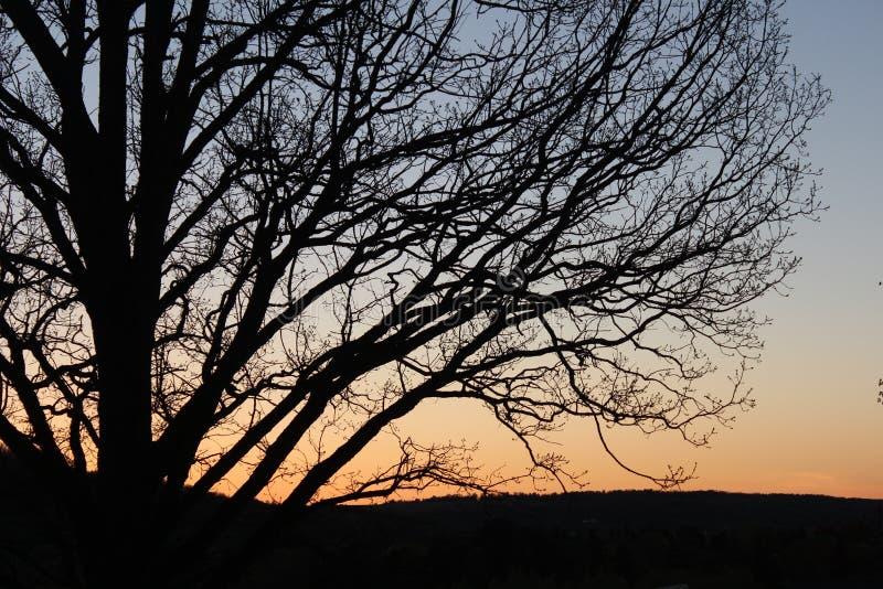 Zonsondergang achter een boom stock fotografie