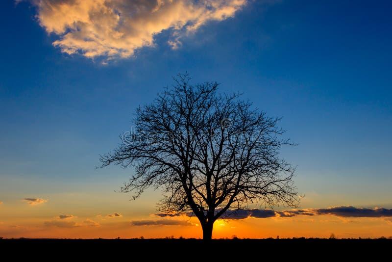 Zonsondergang achter een eenzame boom op de landbouwgebieden stock foto's