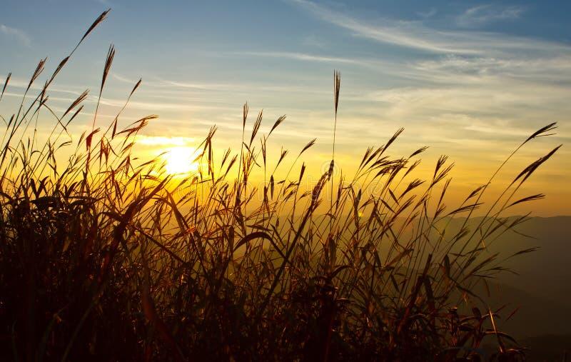Zonsondergang achter gras royalty-vrije stock fotografie