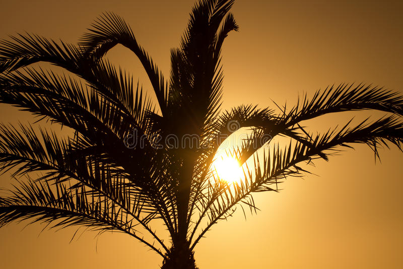 Zonsondergang achter palmsilhouet stock afbeelding