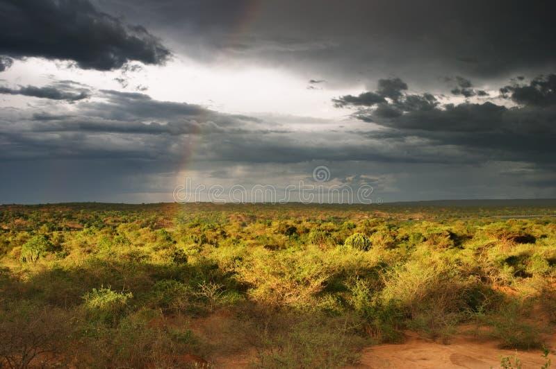 Zonsondergang in Afrikaanse savanne royalty-vrije stock afbeeldingen