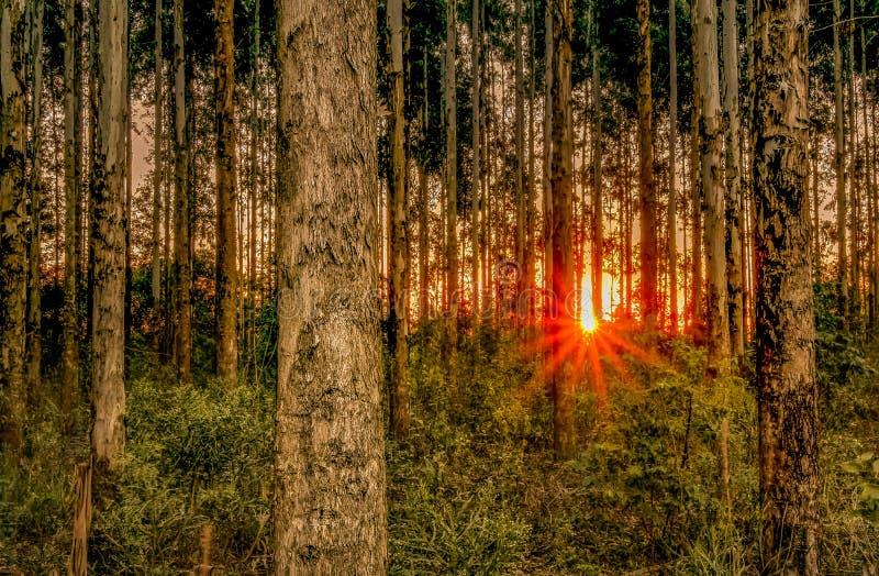 Zonsondergang Amog de Bomen stock foto's