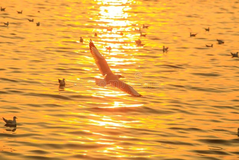 Zonsondergang of avondtijd met gouden hemel op zee of oceaan met zeemeeuwvogel die bij Klappoo vliegen, Samutprakan, Thailand royalty-vrije stock foto's