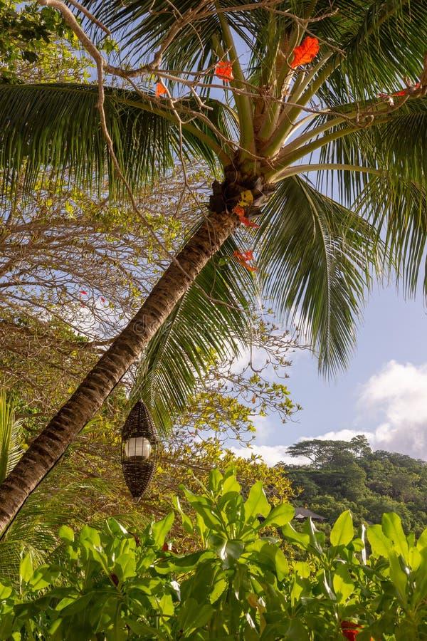 Zonsondergang bij Haven Launay, Mahe Island, Seychellen royalty-vrije stock afbeelding