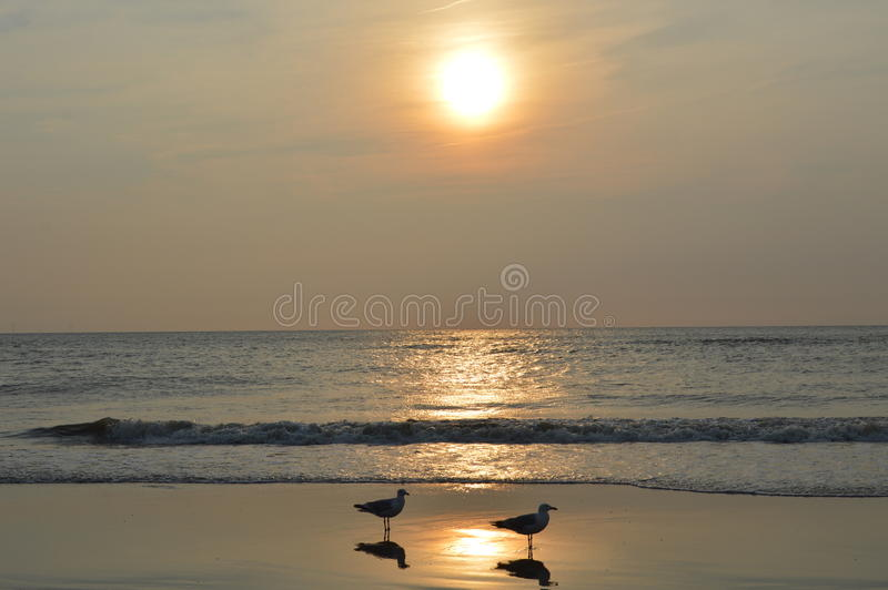 Zonsondergang bij het Nederlandse strand royalty-vrije stock foto