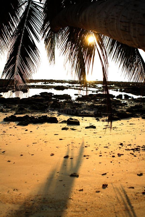 Zonsondergang bij het strand stock afbeeldingen