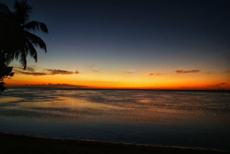 Zonsondergang bij het strand onder een palmtree op een tropisch eiland stock foto