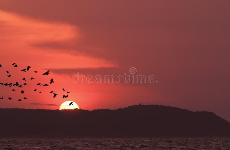 Zonsondergang bij samaestrand, koh larn, Thailand stock fotografie