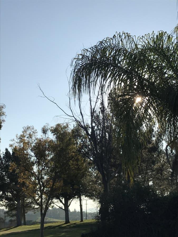 Zonsondergang bijna beeld die verschillende soorten bomen kenmerken stock foto