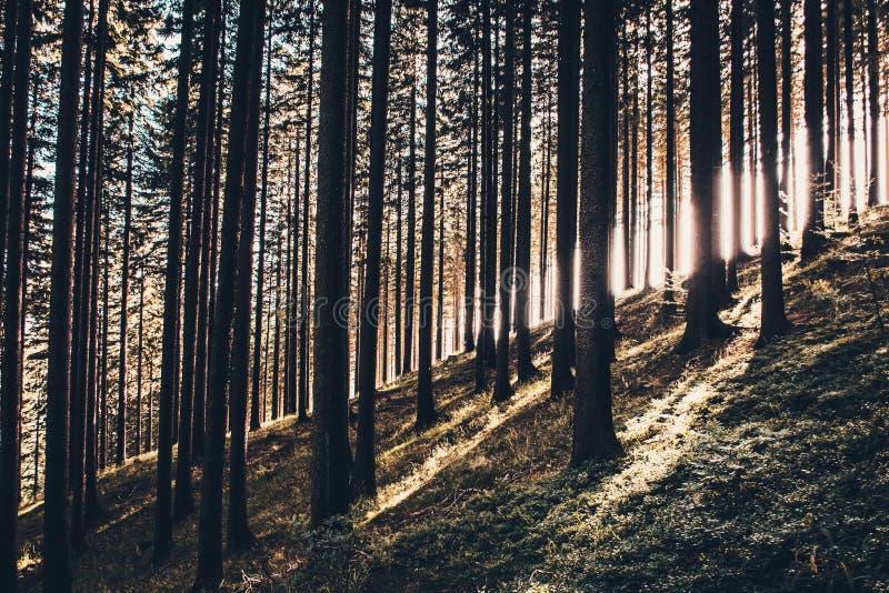 Zonsondergang in bos stock fotografie