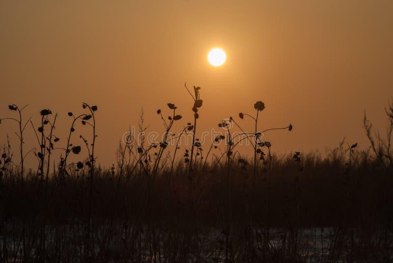 Zonsondergang boven het het de wintersgebied en gras royalty-vrije stock afbeeldingen