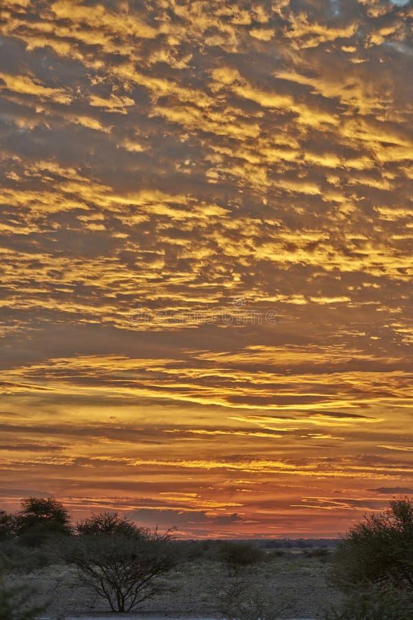 Zonsondergang in Centrale het Spelreserve van Kalahari stock fotografie