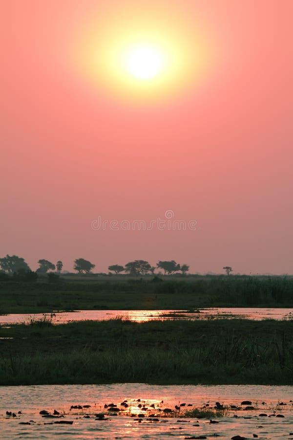 Download Zonsondergang In Chobe Riverfront Van Een Boot Stock Foto - Afbeelding bestaande uit blauw, summer: 39111254