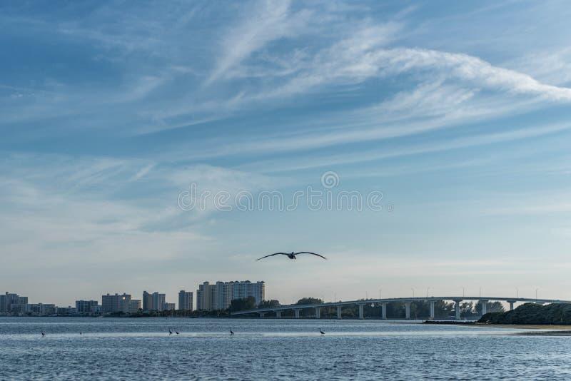 Zonsondergang in Clearwater-Strand, Florida Vliegende pelikaan royalty-vrije stock afbeeldingen