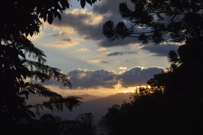 Zonsondergang in de aard tussen de bomen stock afbeelding