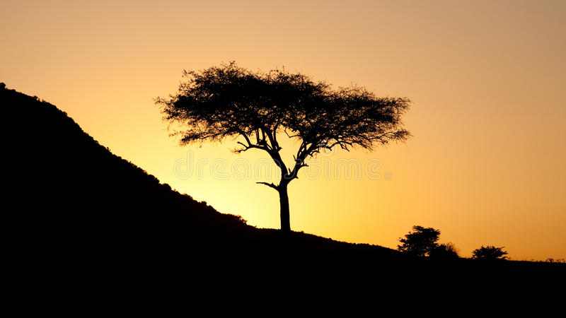 Zonsondergang in de Afrikaanse savanne royalty-vrije stock foto's
