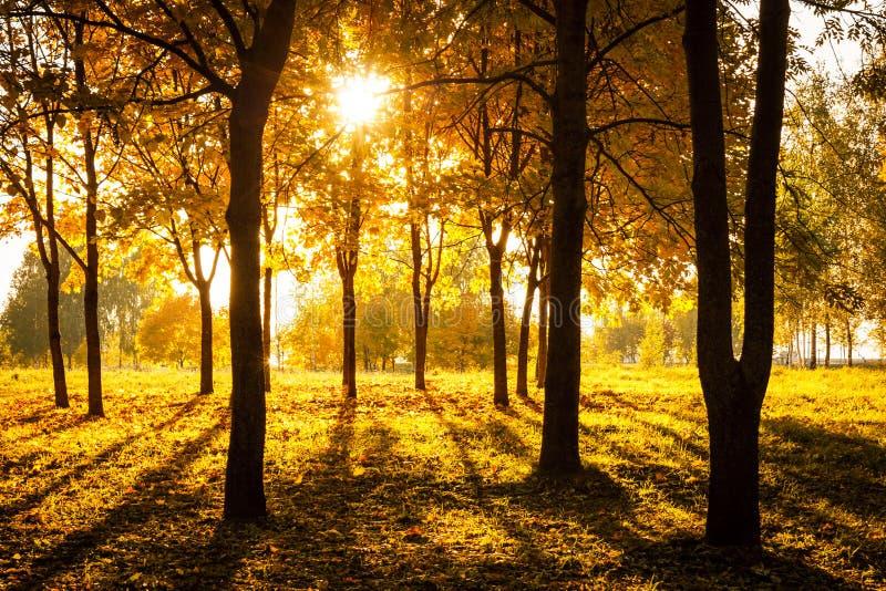 Zonsondergang in de herfstpark Dalingsconcept royalty-vrije stock afbeelding