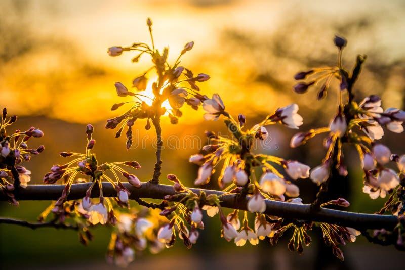 Zonsondergang in de lente stock foto