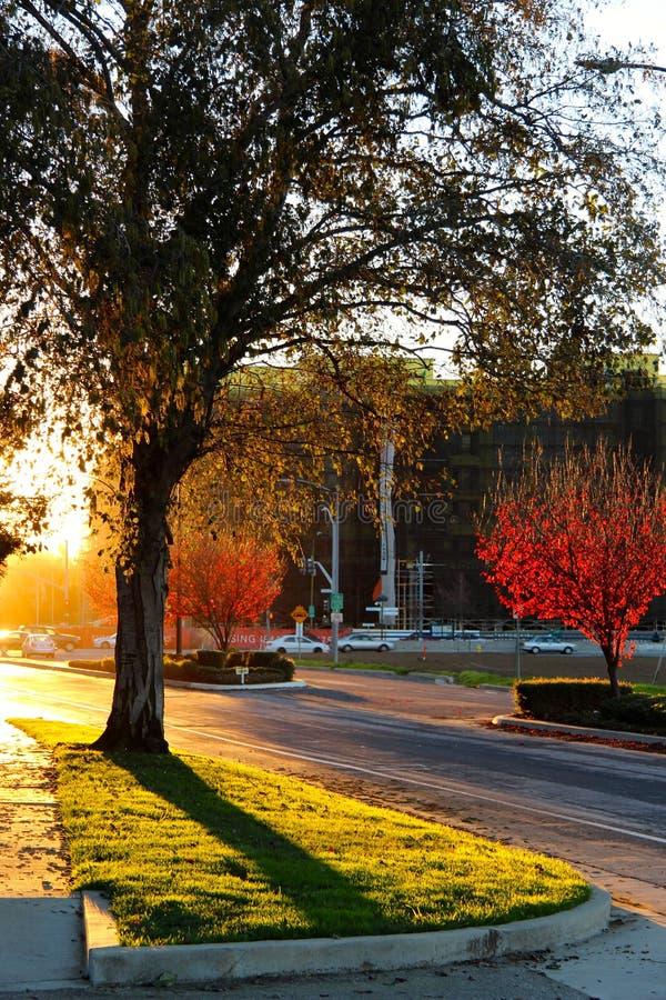 Zonsondergang in de stad, de weg en de bomen stock fotografie